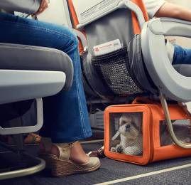 GOL amplia serviço de transporte de pets na cabine para voos internacionais GOL amplia serviço de transporte de pets na cabine para voos internacionais